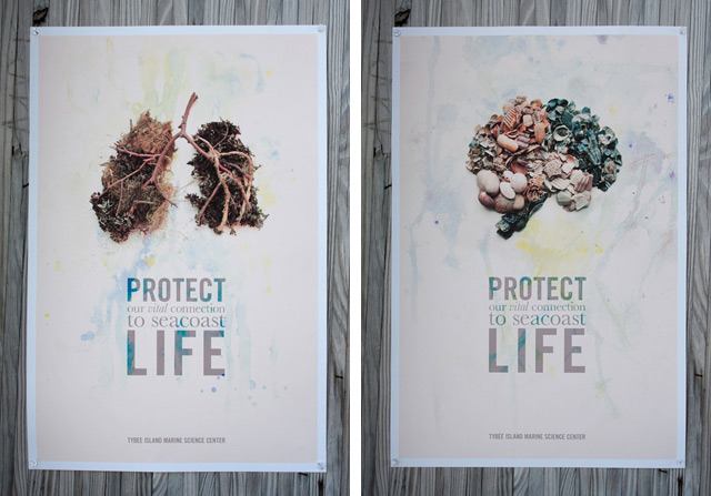 Tybee Island Seacoast Ecology Posters by Michelle Berki