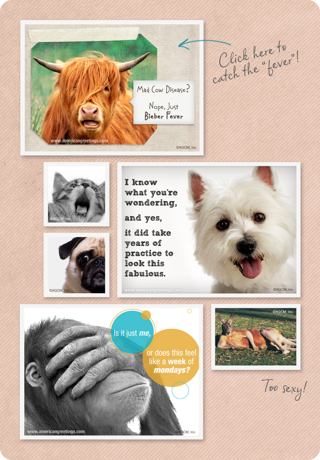 Cute, funny pet cards