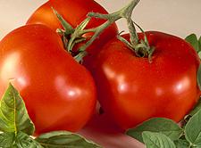 American-Greetings_tomato-basil-skewers