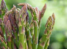 AmericanGreetings_roasted-asparagus