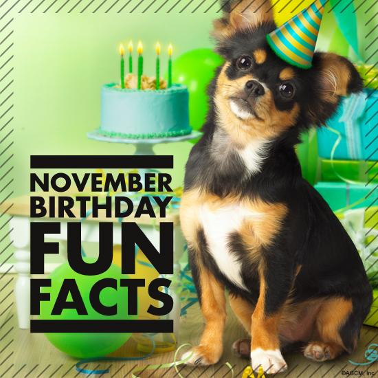 11012013_November-Birthdays_American-Greetings